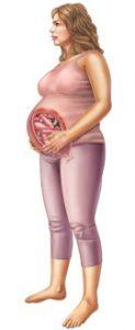 36 неделя беременности: развитие плода